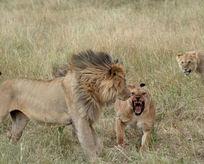 Kralların kavgası bakın nasıl bitti!