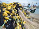 Denizlerde av yasa�� ba�l�yor