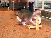 Bursal�lar�n 'Jaws' merak�