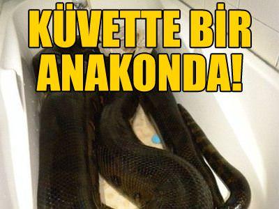 K�vette dev bir anakonda
