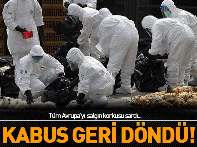 AB'DE KUŞ GRİBİ PANİĞİ!