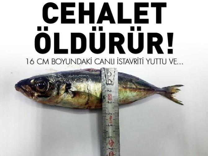 16 CM UZUNLUĞUNDA İSTAVRİTİ YUTTU VE...