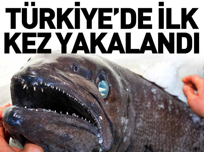 T�rkiye sular�nda bir ilk!