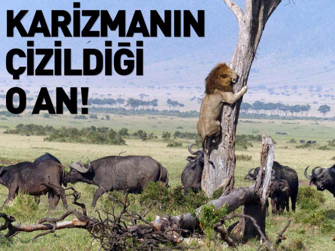 ASLAN'IN KARİZMASININ ÇİZİLDİĞİ O AN!