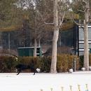 Berdimuhamedov'u karşılama töreninde köpek paniği