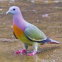 D�nyan�n en renkli hayvanlar�