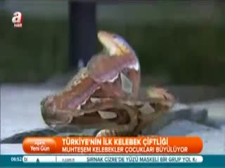 T�rkiye'nin ilk kelebek �iftli�i