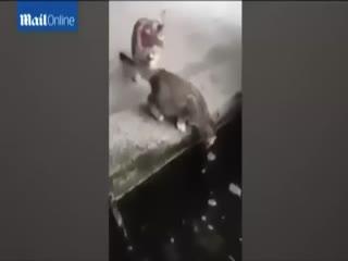 Bal�k k�y�da avlanan kediyi b�yle yuttu