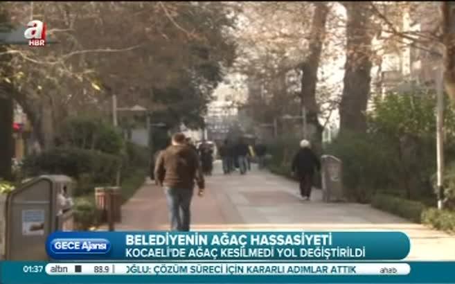 Kocaeli Belediyesi'nin ağaç hassasiyeti!