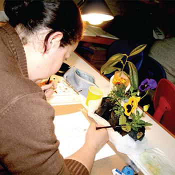 Bitki ressamlığı