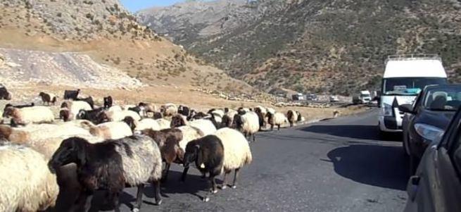 13 polise koyun sürülü hain pusu
