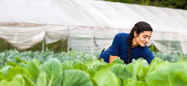 Hibe için 378 bin genç çiftçi başvurdu