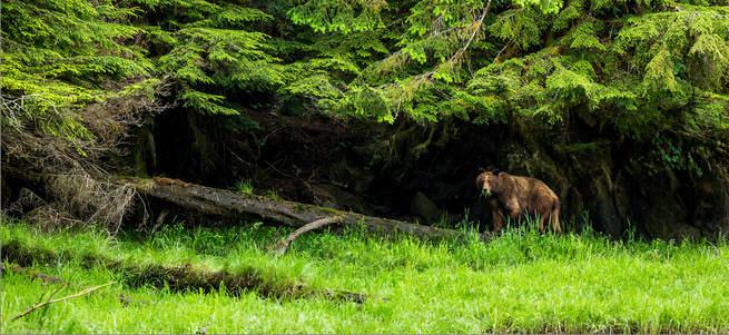 Kadın doğururken, yanındakiler ayıları uzaklaştırmak için ateş açtı