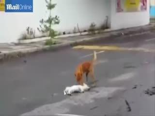 Dünyay� a�latan köpek