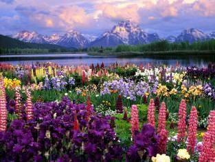K���n hangi çiçek ekilir?