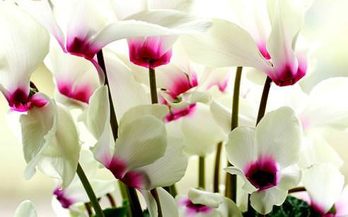 "<a href=""/Index/kis_cicekleri"" target=""_blank"" rel=""tag"">K�� çiçekleri</a>"
