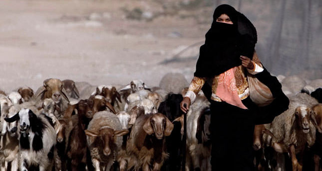 UN protests transfer of Palestinian Bedouins