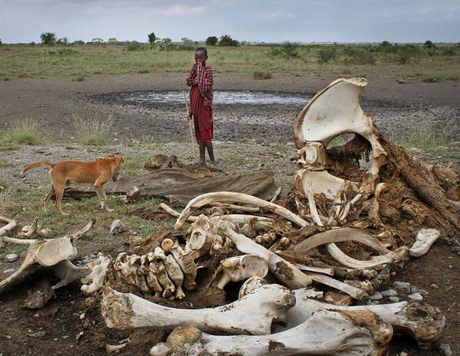 Tanzania to displace 40,000 Masai from ancestral land for Dubai royal family