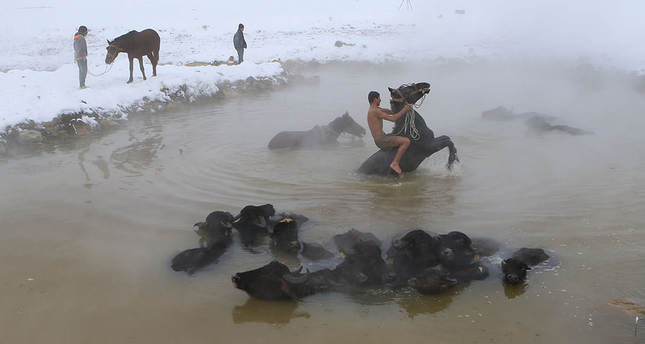 A steamy getaway for animals as the east battles cold