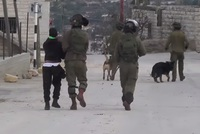 A local rights watchdog on Tuesday called for Israel to be prosecuted in an international court following the appearance of footage that appears to show Israeli troops using police dogs to...