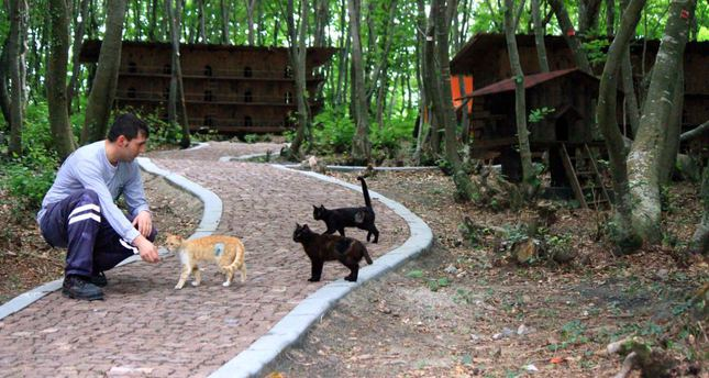 how to build a shelter for stray cats