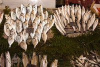 Turkey, a country littoral to three seas, saw a 30 percent decline in the amount of fish caught in the past decade, raising concerns on the effect of overfishing on fish stocks. Experts warn high...