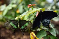 The newly opened Butterfly Park in southern Antalya is attracting scores of visitors with its collection of multihued butterflies. The park contains several different species of butterflies,...