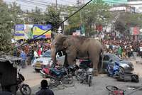 A wild elephant wreaked havoc in an eastern Indian town on Wednesday, damaging dozens of homes and sending locals scurrying for cover before it was brought under control using tranquillizers, news...