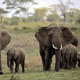 UN culture body warns Tanzania on Serengeti highway