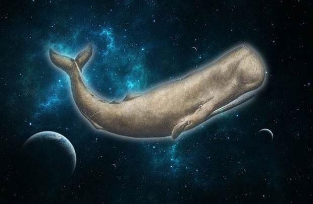 Beyaz balina uzayda