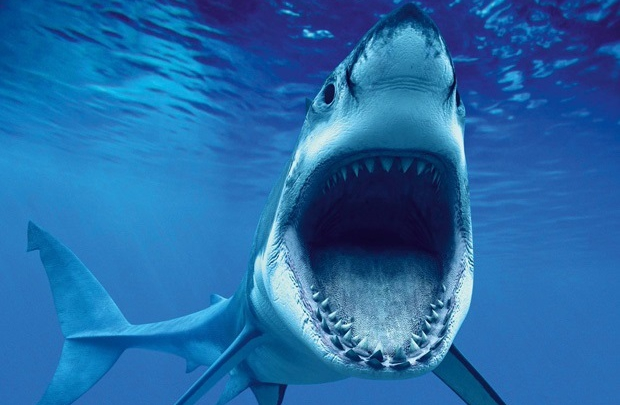 Bizi Sharknado'yla korkutamazsınız