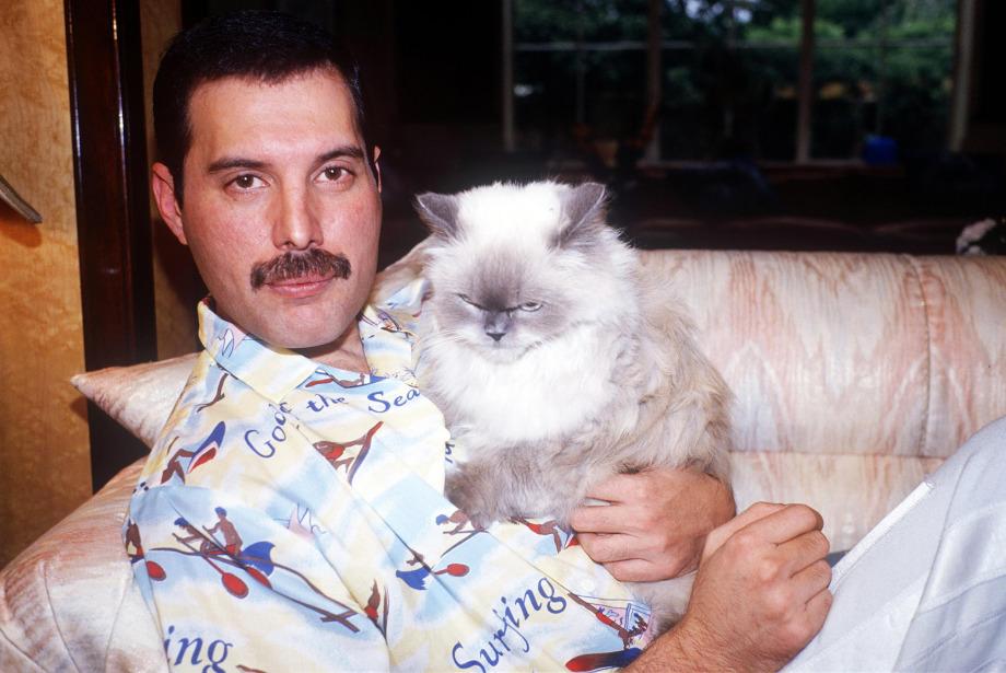 Doğum gününe özel: Freddie Mercury ve kedileri
