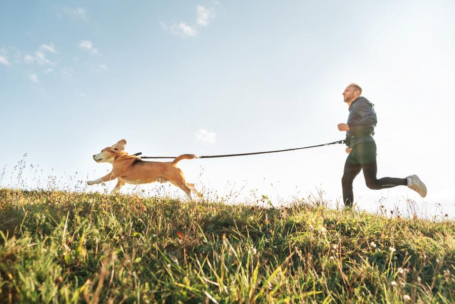 Neden Köpeğinizle Koşuya Çıkmalısınız?