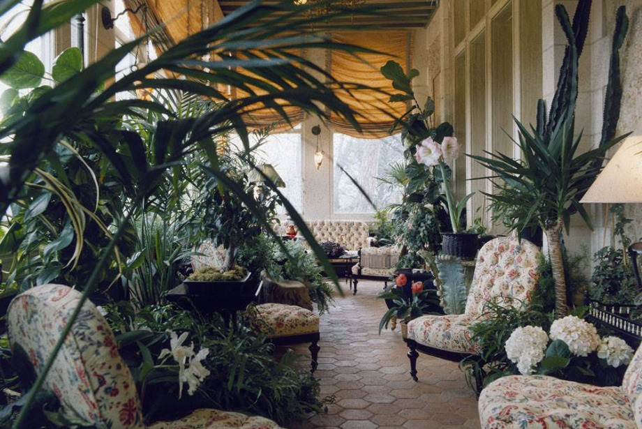 Pandemi Döneminde Aldığınız Ev Bitkilerini Yaşatmanın 8 Yolu
