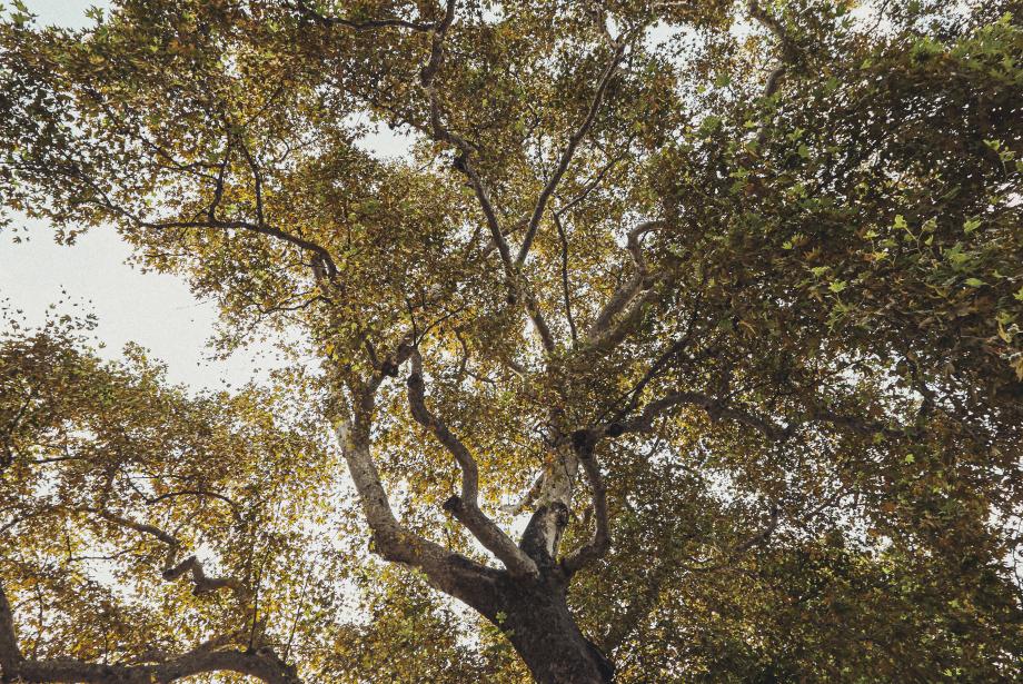 Ağaçların Dili Olsa...