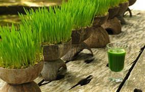 Çimen suyunun faydaları