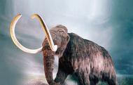 Mamutlar diriliyor mu?