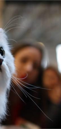 Evcil hayvan sahiplerine dair bilinmesi gerekenler