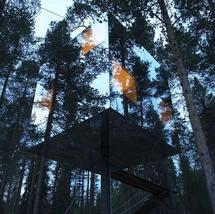 Görünmez ağaç evlere siz de çok şaşıracaksınız