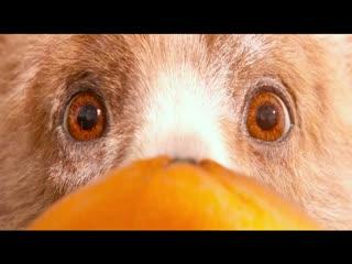Ayı Paddington filminin fragmanı