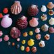 Deniz Kabuğu Süsleme Atölyesi – AVM Etkinlikleri
