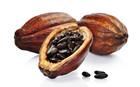 Kakao ya��n�n bilinmeyeni