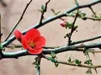 Çiçekler bahar ay�nda