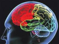Beynimiz ne renktir?