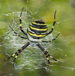 Örümcek a��n� örerken ipli�i nereden buluyor?