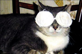 Göz bantl� kedi