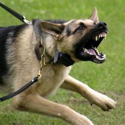 Aç bırakılan köpekler sahibini yedi