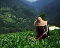 ��çilerden çay molas�