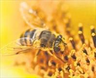Gençlik iksiri ar� poleni