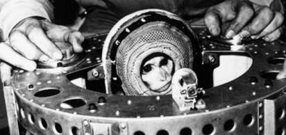 ABD tarafından uzaya gönderilen iki maymun, sağ olarak Dünya'ya döndü.
